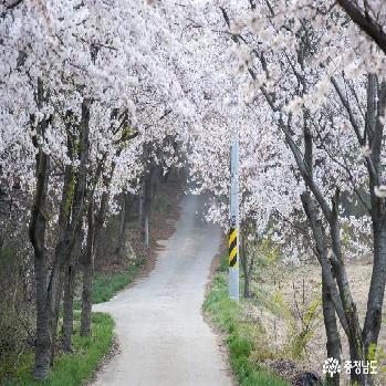 홍성 백월산 자락 그림같은 봄꽃 풍경