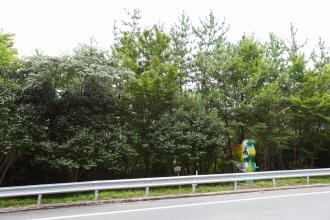천연기념물제233호_거제학동리동백나무및팔색조번식지 썸네일