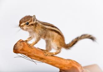 다람쥐 썸네일