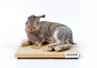 토끼 썸네일